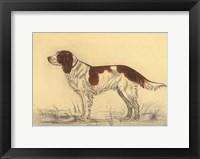 Hunting Dogs-Spaniel Framed Print