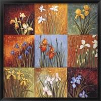 Iris Fields I Framed Print