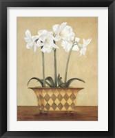 Framed Amaryllis In Checkered Vase