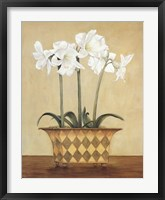 Framed Amaryllis In Checkered Vase
