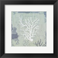 Seaside Coral IV Framed Print
