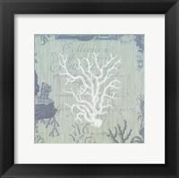 Framed Seaside Coral IV