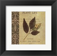 Botany Principles II Framed Print