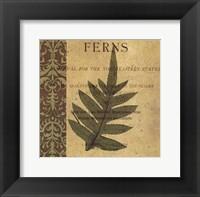 Framed Botany Principles IV