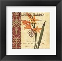 Gladiolus I Framed Print