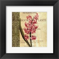 Framed Hyacinth