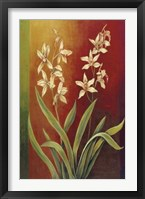 Framed Cymbidium II