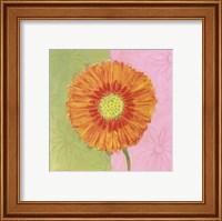 Framed Orange Daisy
