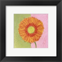 Framed Orange Daisy