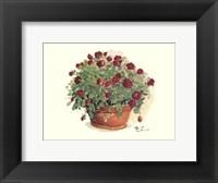 Framed Red Rose Portrait