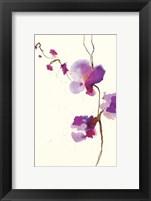 Framed Velvet Orchid