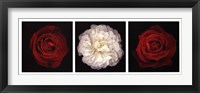 Framed Rose Gallery I