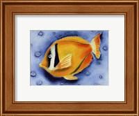 Framed White Banded Island Fish
