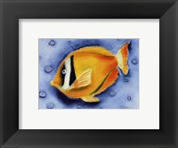 Framed White Banded Island Fish