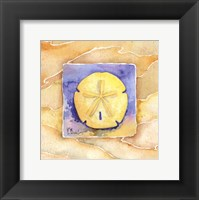 Framed Sand Dollar - Mini