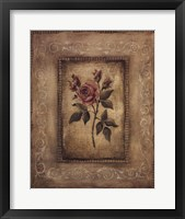Savin Rose Framed Print