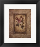 Framed Savin Rose - Mini