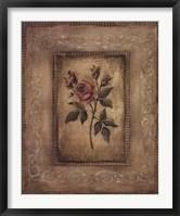 Grand Savin Rose Framed Print