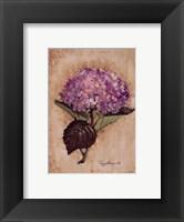 Framed Blooming Hydrangea