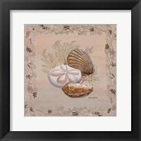 Framed Pastel Shell IV