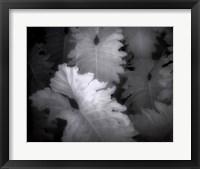 Flora Exotica IX Framed Print