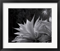 Framed Flora Exotica X