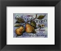 Cottage Garden II Framed Print