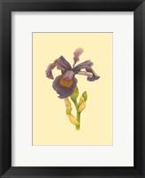 Framed Iris Bloom III