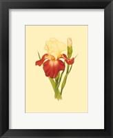 Framed Iris Bloom VIII