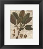 Framed Leaves III