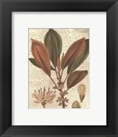 Framed Leaves IV