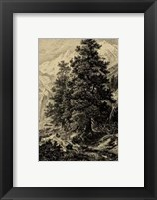 Framed Arolla Pine