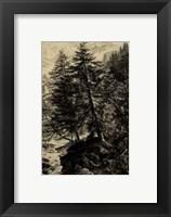 Framed Larch Tree