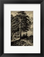 Framed Wild Pine