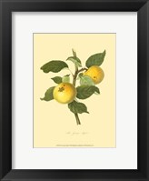 Framed Grange Apple