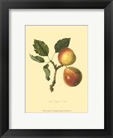 Framed Longland Pear