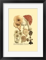 Framed Mushrooms I