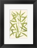 Framed Woodland Ferns I