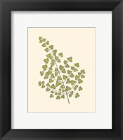 Woodland Ferns II Framed Print