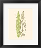 Framed Woodland Ferns V