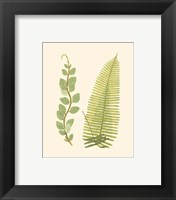 Framed Woodland Ferns VI