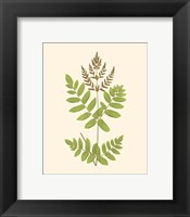 Framed Woodland Ferns VII