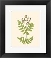 Woodland Ferns VII Framed Print