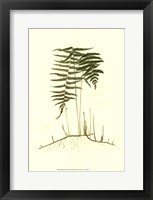 Framed Spring Ferns III
