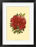 Framed Blooming Azalea I