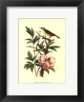 Framed Bird In Nature III