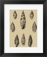 Framed Shells On Khaki IV