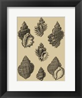 Framed Shells On Khaki V