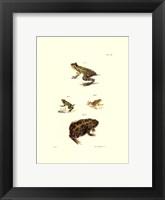 Framed Antique Frogs II