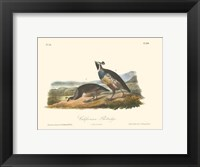 Framed California Partridge